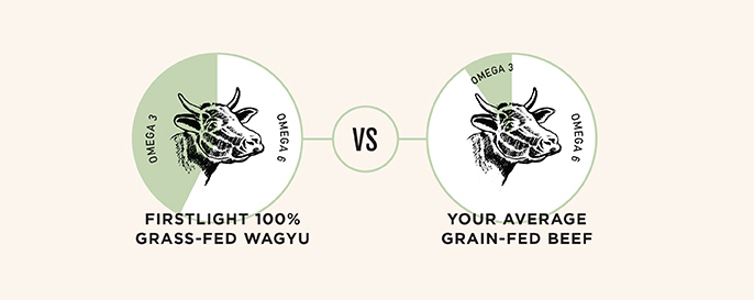 Infographic of how Omega 3:6 ratios in Firstlight Wagyu are superior to those of grain-fed beef